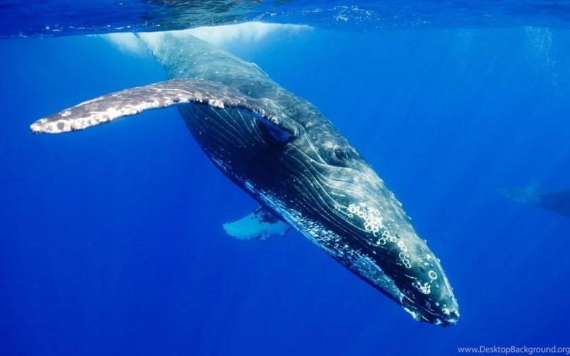 Samsung Galaxy S8 Wallpaper Whale Djiwallpaper Co