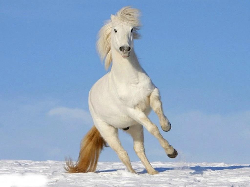 white horse wallpaper for phone   imagewallpapers.co
