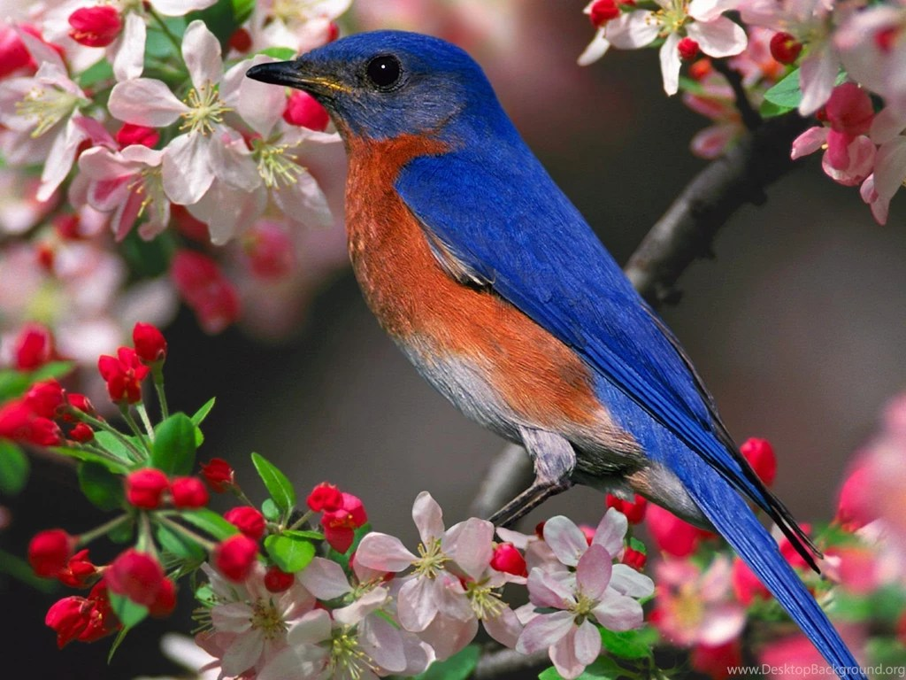 free desktop wallpaper spring birds | imagewallpapers.co