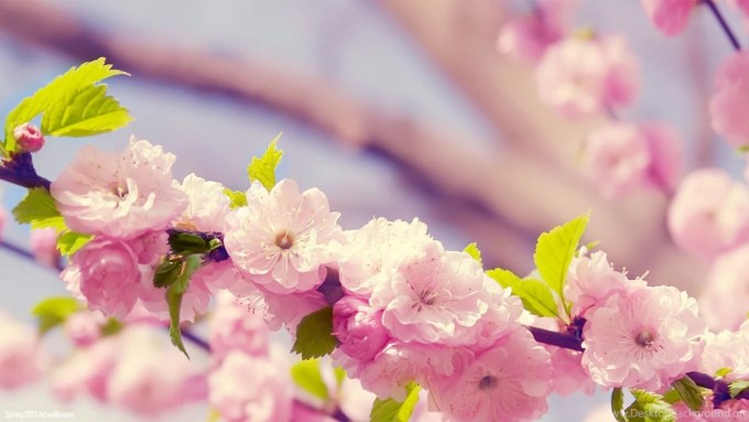 Desktop wallpaper spring flowers siewalls spring flowers backgrounds desktop wallpapers cave background mightylinksfo