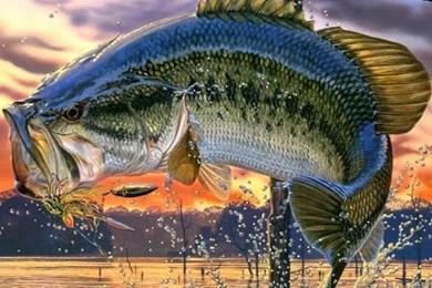 Zendha Bass Fishing Wallpaper Iphone