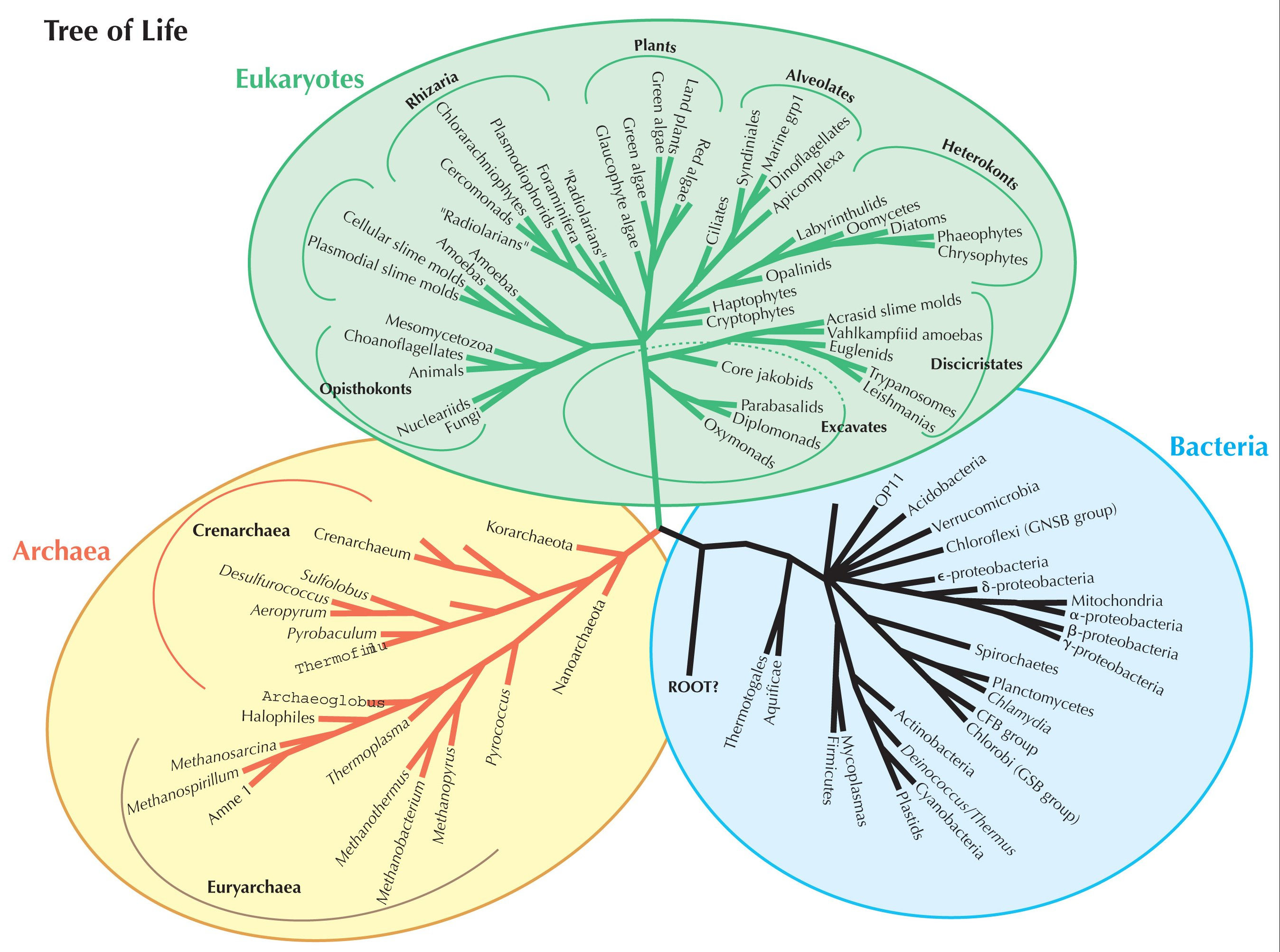 Two To Five Kingdom Classification Systems F Biology