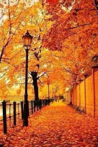 Fall Pumpkin Iphone Wallpaper 风景壁纸 高清手机壁纸 桌面天下(desktx Com)