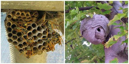 Bee Removal Des Moines Backyard Beekeepers