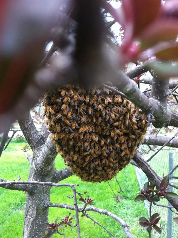 swarm, Des Moines