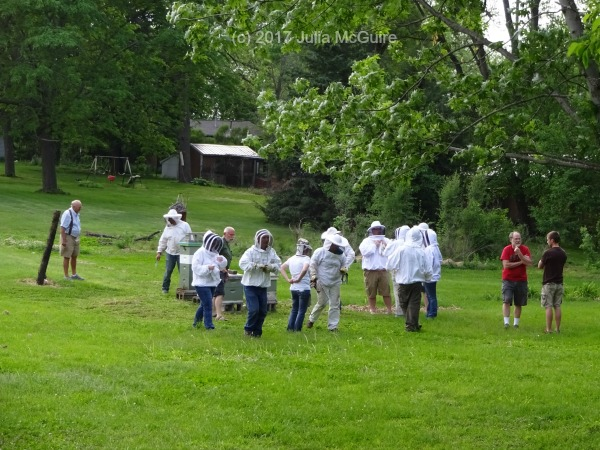 Blog Des Moines Backyard Beekeepers Supporting Honey