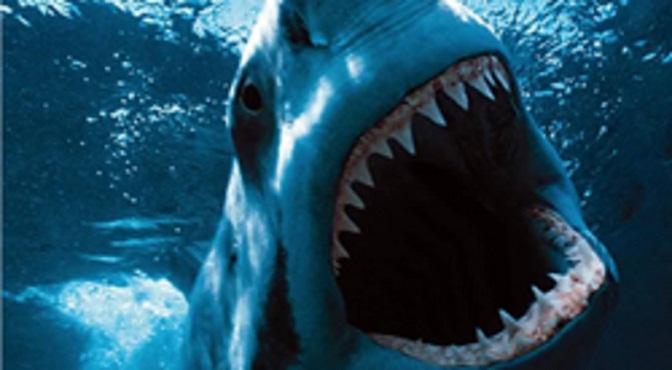 Tiburón muerde a una niña de 10 años en una playa de Florida