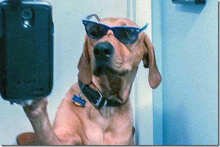 geeky-dog-selfie