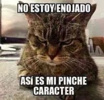memes-whatsapp-de-animales-16