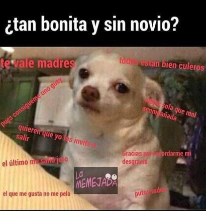 memes-whatsapp-de-animales-18