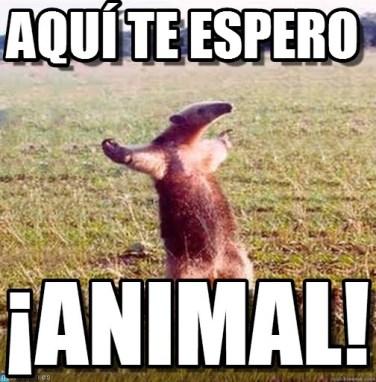 memes-whatsapp-de-animales-21