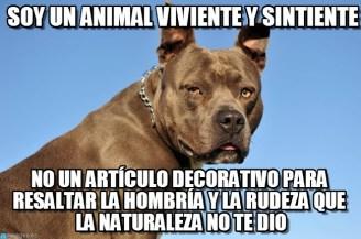 memes-whatsapp-de-animales-22