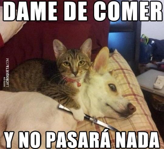memes-whatsapp-de-animales-25