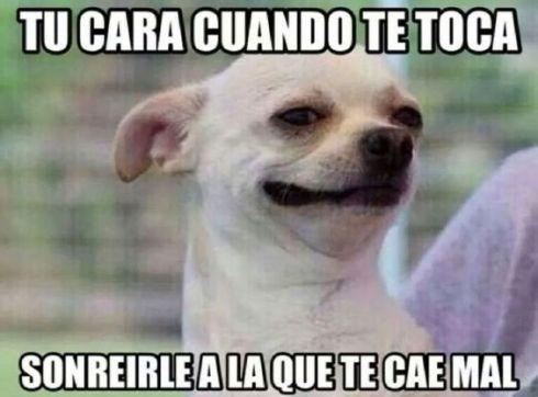 memes-whatsapp-de-animales-30