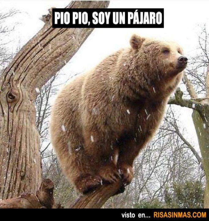 memes-whatsapp-de-animales-32