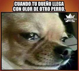 memes-whatsapp-de-animales-33