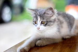 The Ultimate Guide Of How To Get Your House Ready For Your First Pet