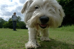The Ultimate Dog Walking Guide For Newbies