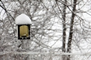 Great Ideas To Enjoy Your Backyard This Winter