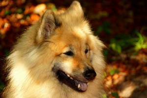 Simple Ways To Check Your Dog Is Happy And Healthy