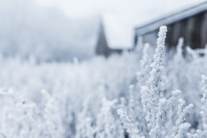 How You Can Embrace Winter