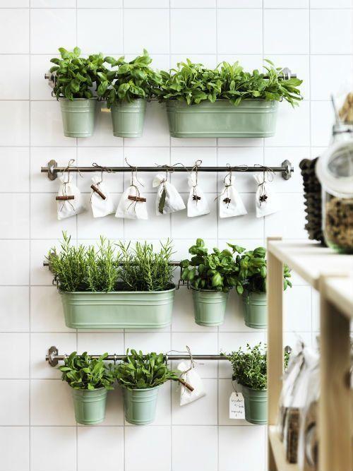 pot de plantes aromatiques dans une cuisine