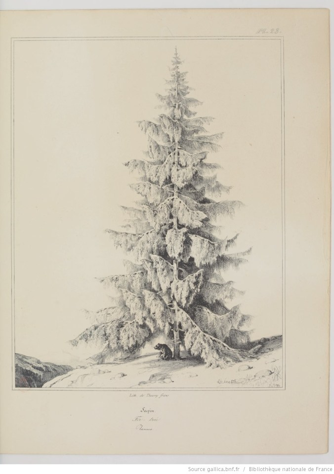 sapin, dessiner un arbre