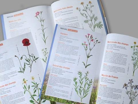 Vue des pages sur les plantes messicoles