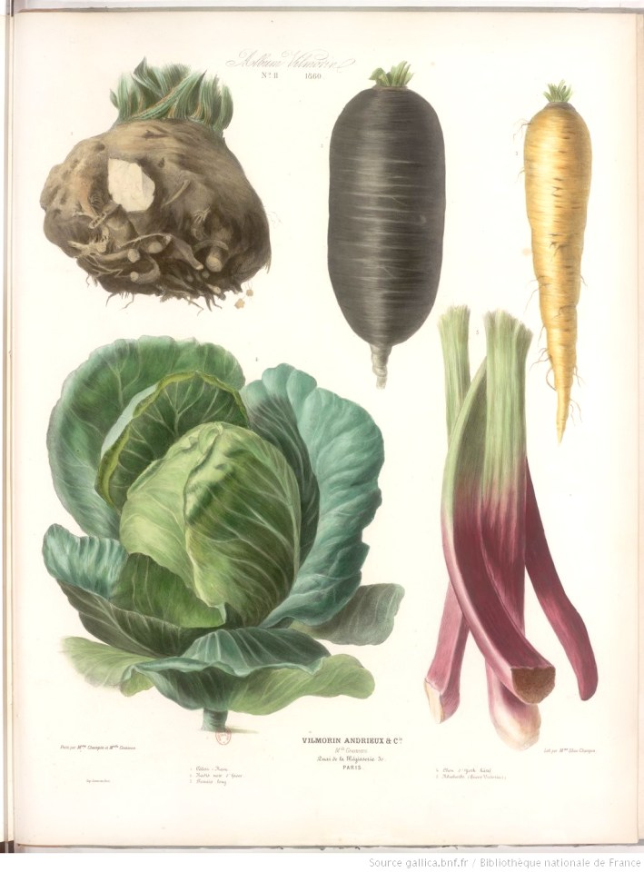 illustration de legumes