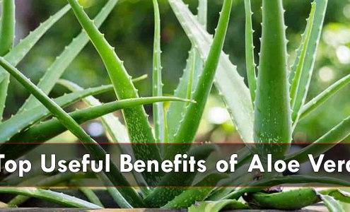 Top-Benefits-of-Aloe-Vera