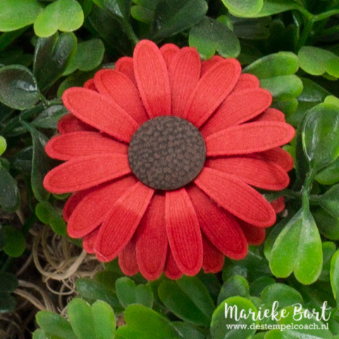 Medium Daisy Punch by Stampin' Up!