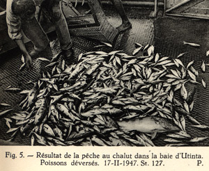 Résultat d'une pêche au châlut dans la baie d'Utinta.