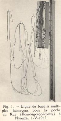 Pêche du Boulengerochromis microlepis.