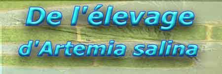 Elevage artémias