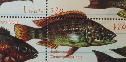 Haplochromis ( Ctenochromis ) horei.