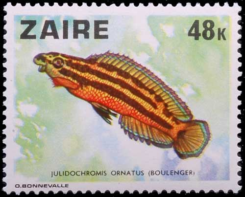 Julidochromis ornatus, timbre Zairois.