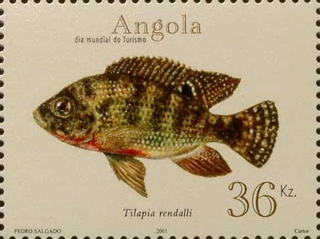 Timbre de l'Angola, représentation de Tilapia rendalli.