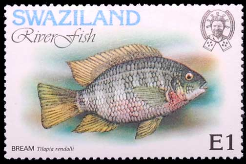 Tilapia rendalli, timbre du Swaziland.
