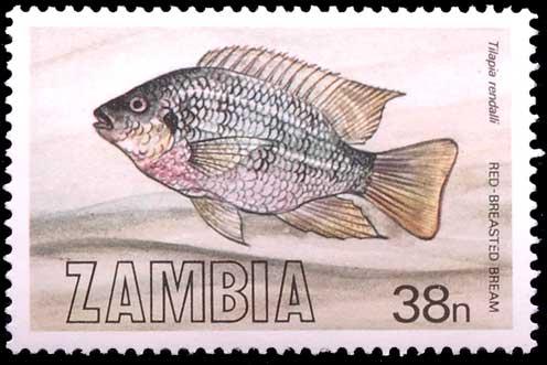LA poste zambienne aussi a éditée un timbre à l'effigie du Tilapia rendalli.