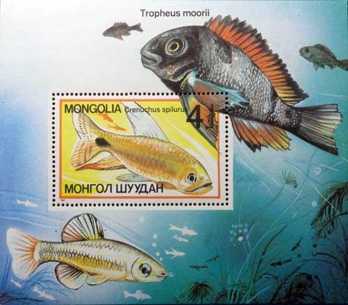 Tropheus moorii, timbre de Mongolie.