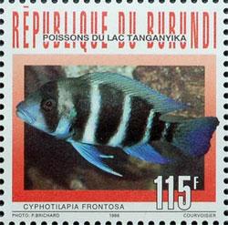Cyphotilapia du Burundi.
