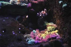 bac-coraux