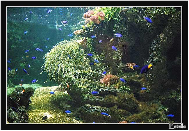 Rencontres sauvages aquarium porte dorée