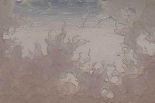 Panagrellus redivivus