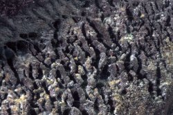 Stromatolites à Mtosi lac tanganyika