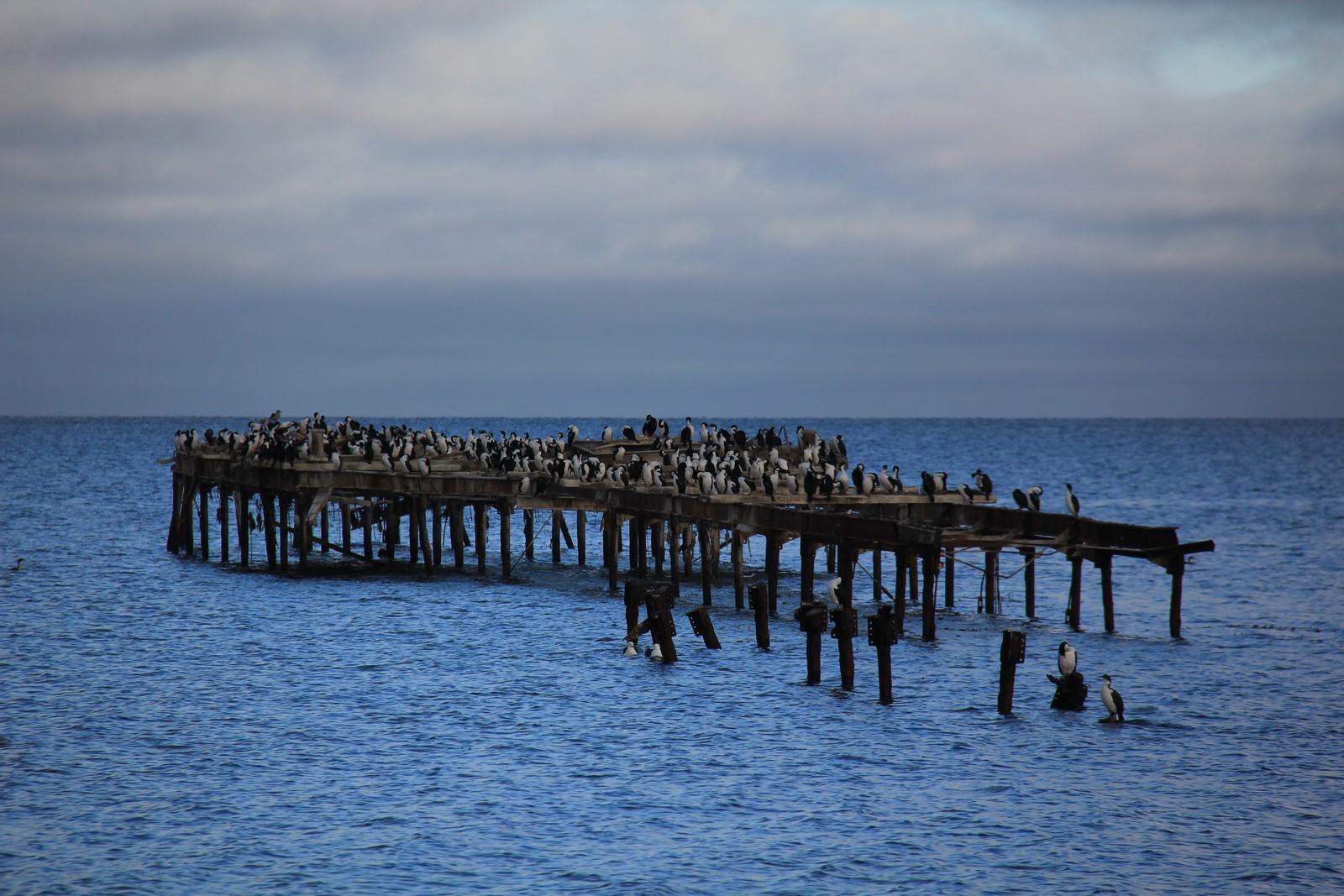 Jour 235 : En route pour le bout du monde, cap sur Punta Arenas !
