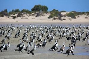 Jours 164 & 165 : Shark Bay et les dauphins de Monkey Mia