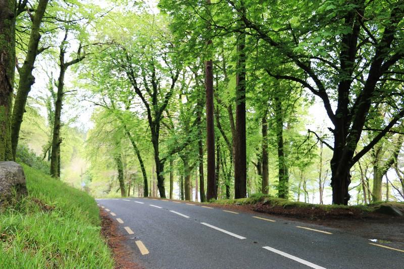 Irlande J7 – De Kenmare au Killarney National Parc