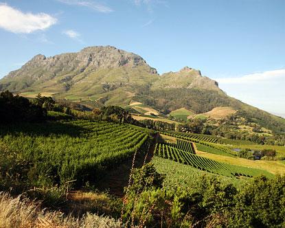 Stellenbosch Stellenbosch Wine