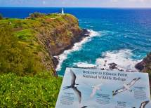 Wildlife Refuges In Kauai - Kilauea Point National